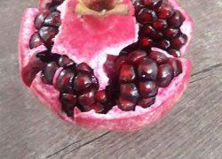Kandahar pomegranate sapling